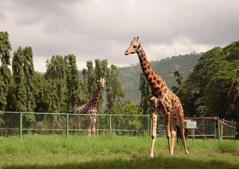 sandeshtheprince zoo